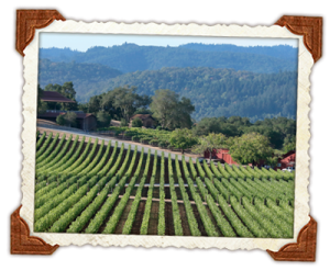 napa valley wine tours 4